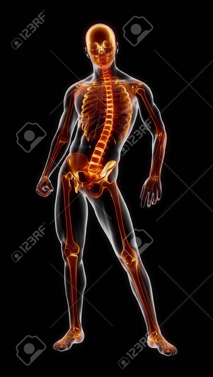 Menschliche Vollständige Skelett Medizinische Scan Lizenzfreie Fotos ...