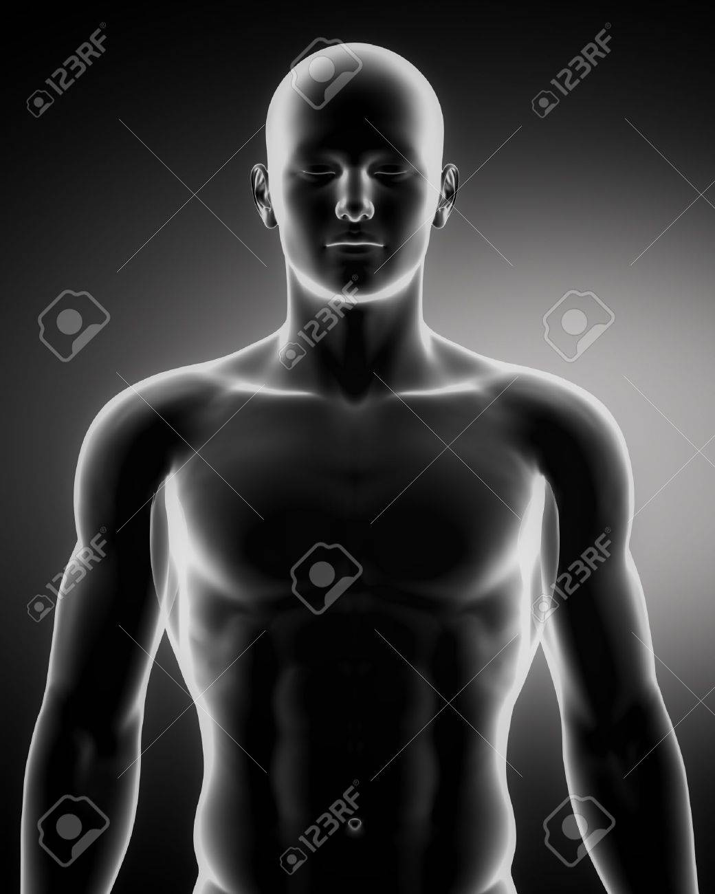 Anatomía Masculina De Los órganos Humanos En Vista De Rayos X Fotos ...