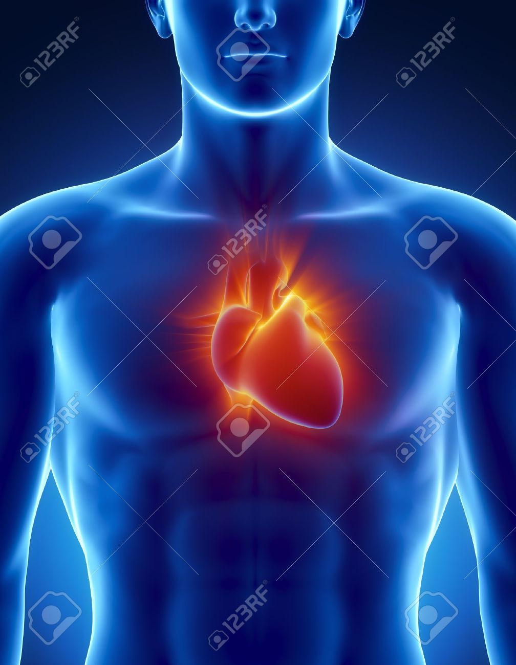 Männliche Anatomie Des Menschlichen Herzens In X-ray-Ansicht ...