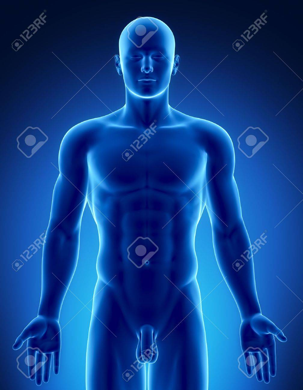 Male anatomy of human organs in x-ray view Stock Photo - 10395447