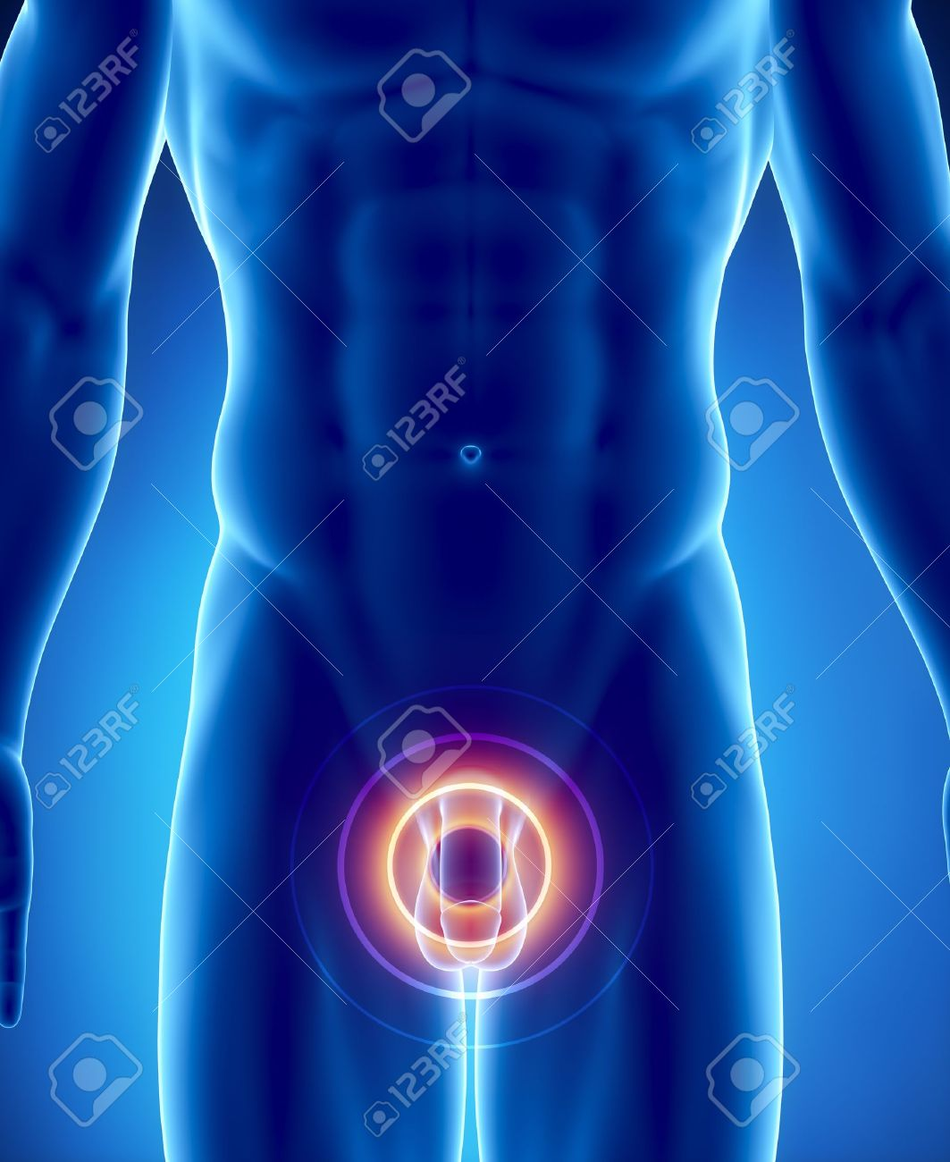 Männliche Anatomie Des Menschlichen Penis In Der Röntgen-Blick ...