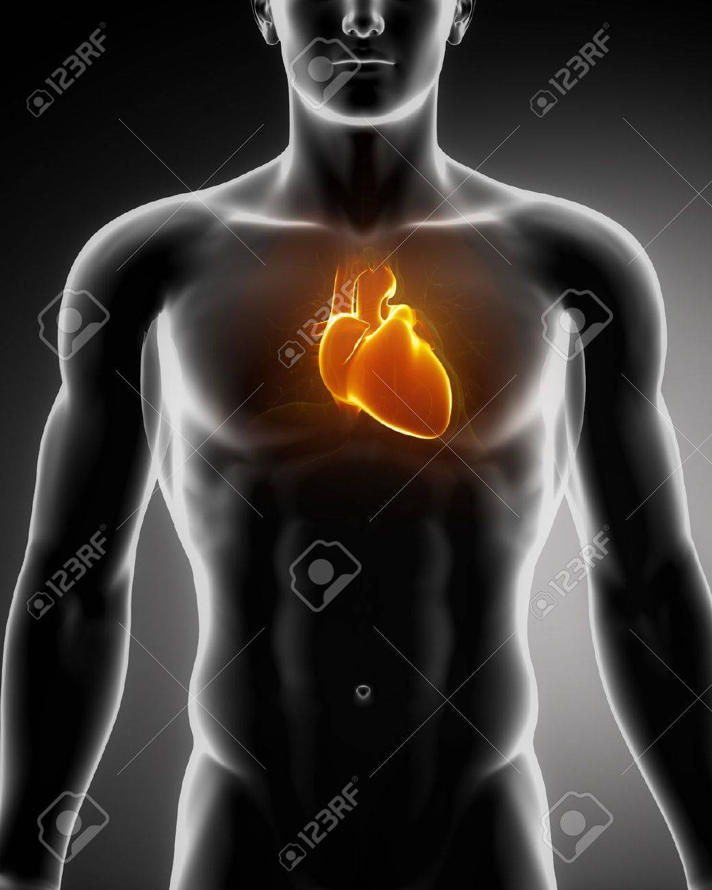 Male Heart Anatomy Of Human Organs In X Ray View Stock Photo