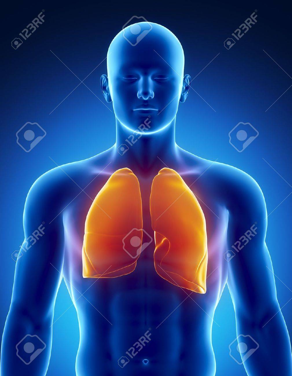 Male LUNGS Anatomy Of Human Organs In X-ray View Stock Photo ...