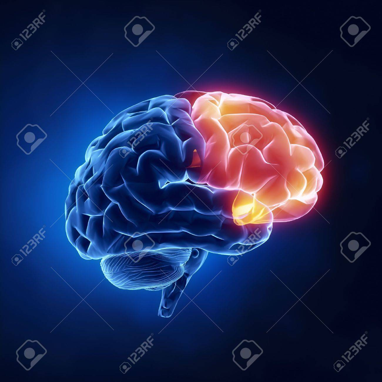 Frontal Lobe - Human Brain In X-ray View Stock Photo, Picture And ...
