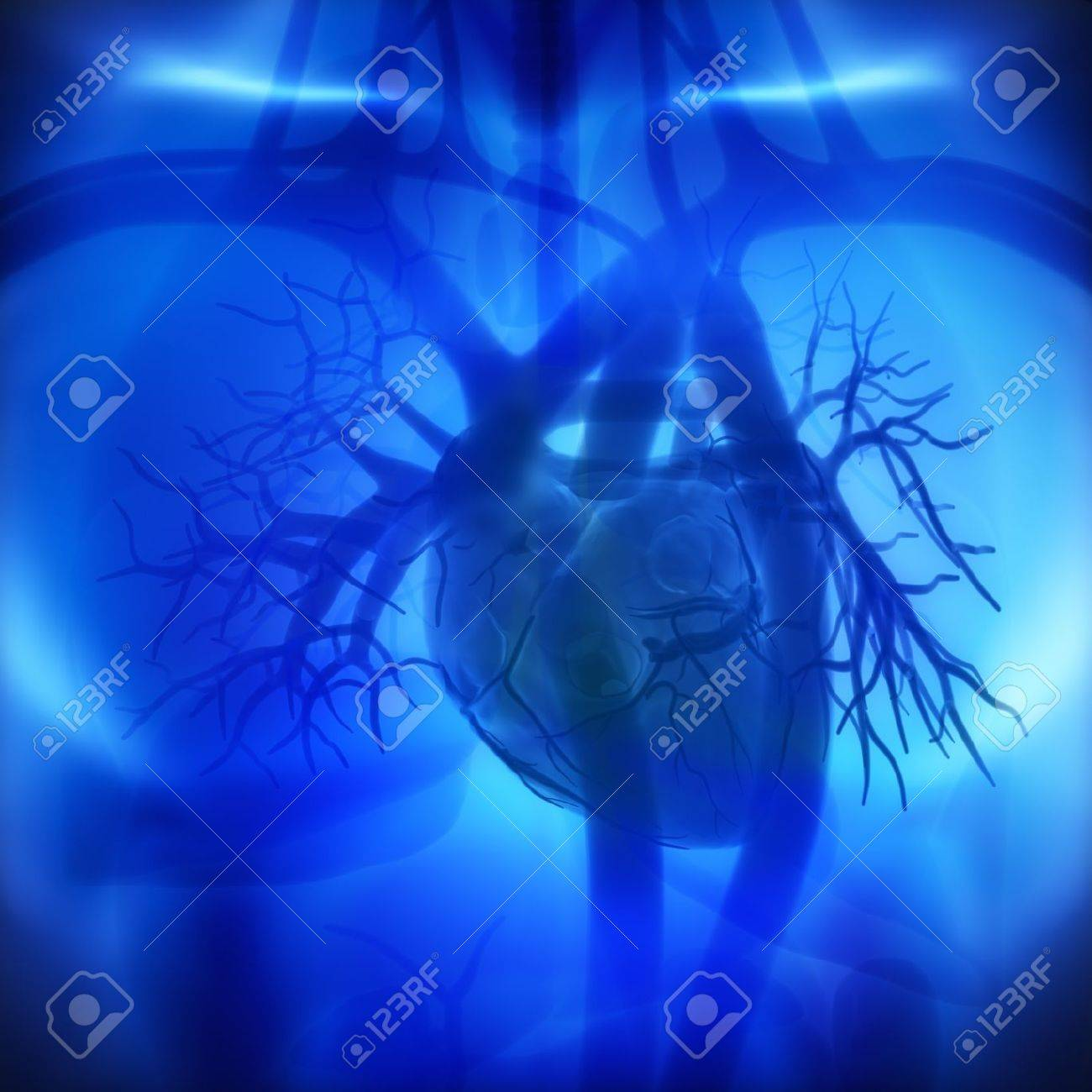 Coronary Arteries Auricles Ventricles In Human Heart Stock Photo
