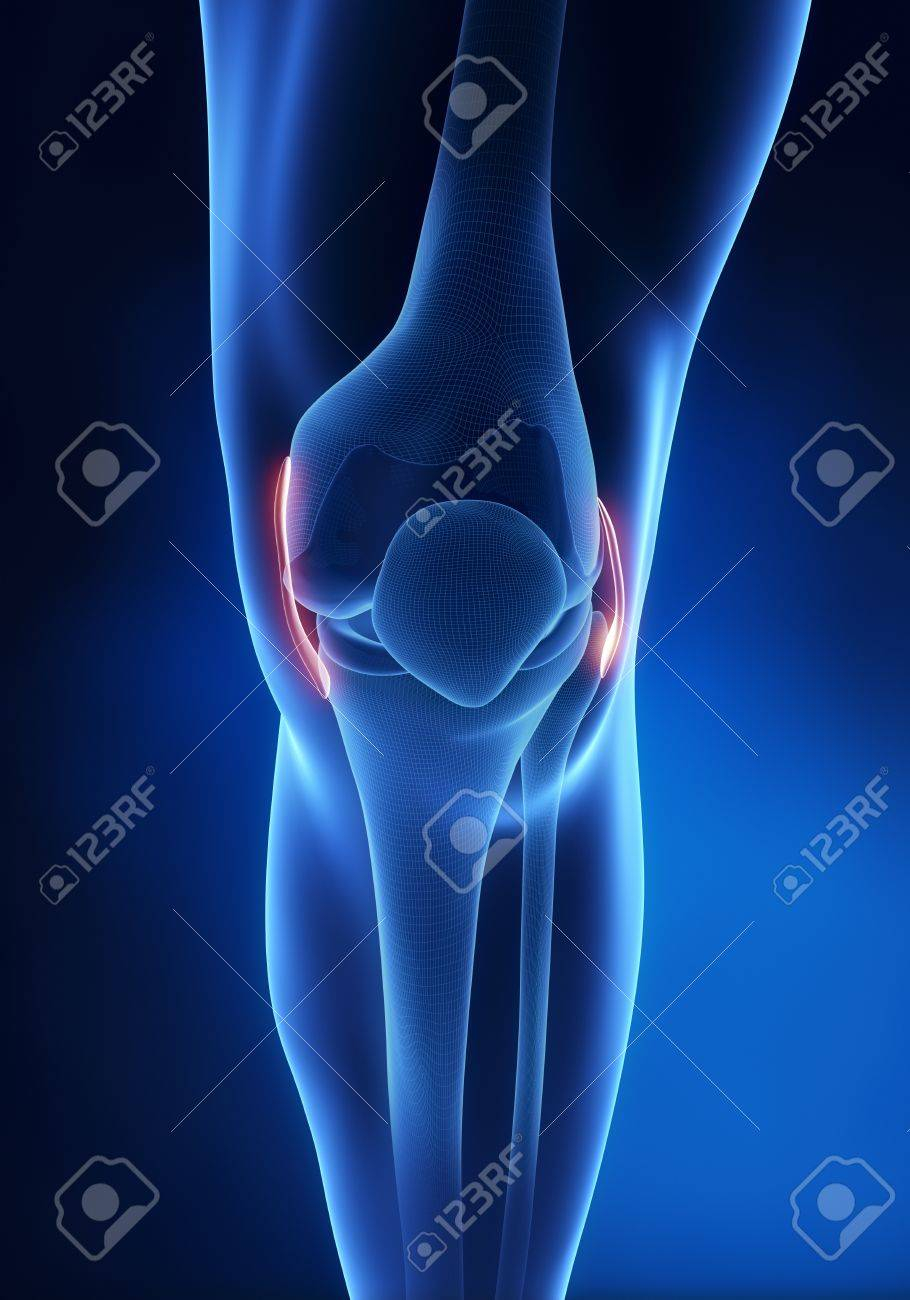 Knee Ligament Anatomy Anterior View Stock Photo, Picture And Royalty ...