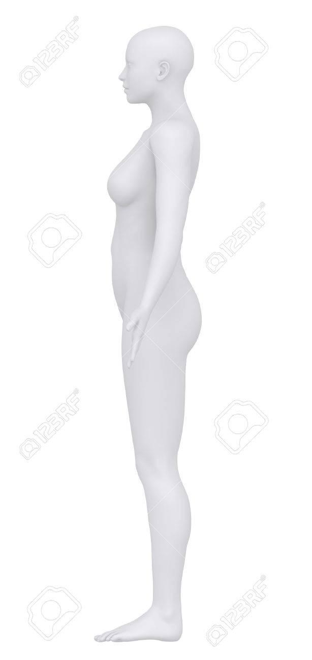 El Cuerpo Femenino En La Posición Anatómica Fotos, Retratos ...