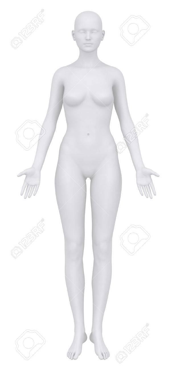 El Cuerpo Femenino En Posición Anatómica Anterior Fotos, Retratos ...