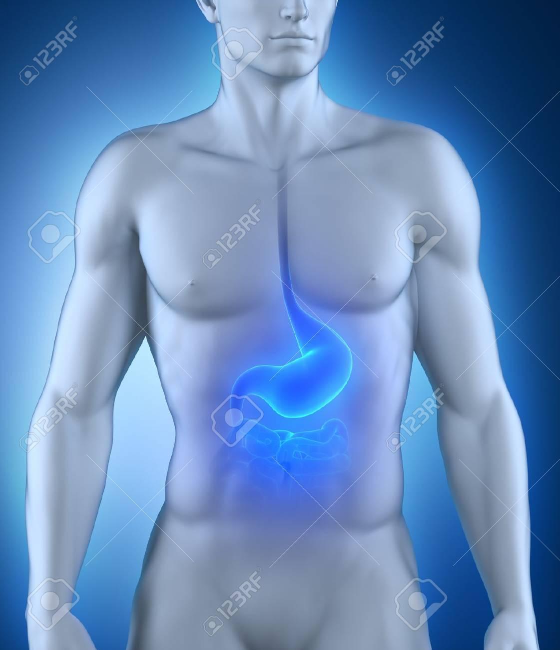 Anatomía Del Estómago Mujer Fotos, Retratos, Imágenes Y Fotografía ...