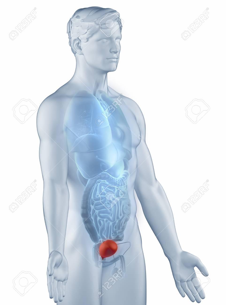 De ontsteking kan behalve in de blaas ook in de plasbuis of in de urineleiders zitten.
