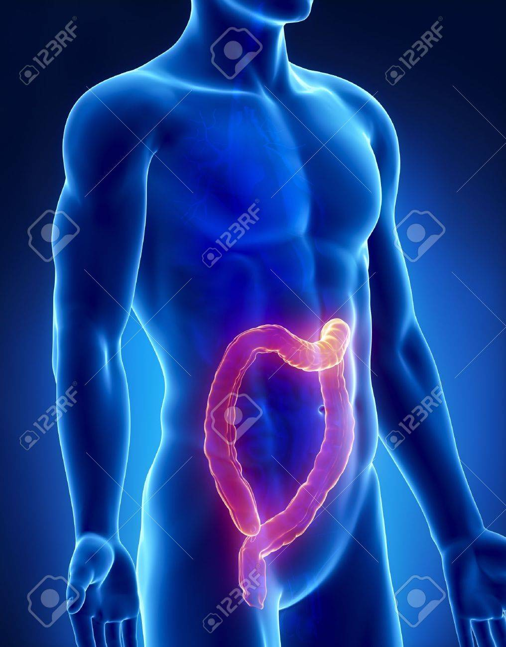 Colon male anatomy anterior x-ray view Stock Photo - 20902057
