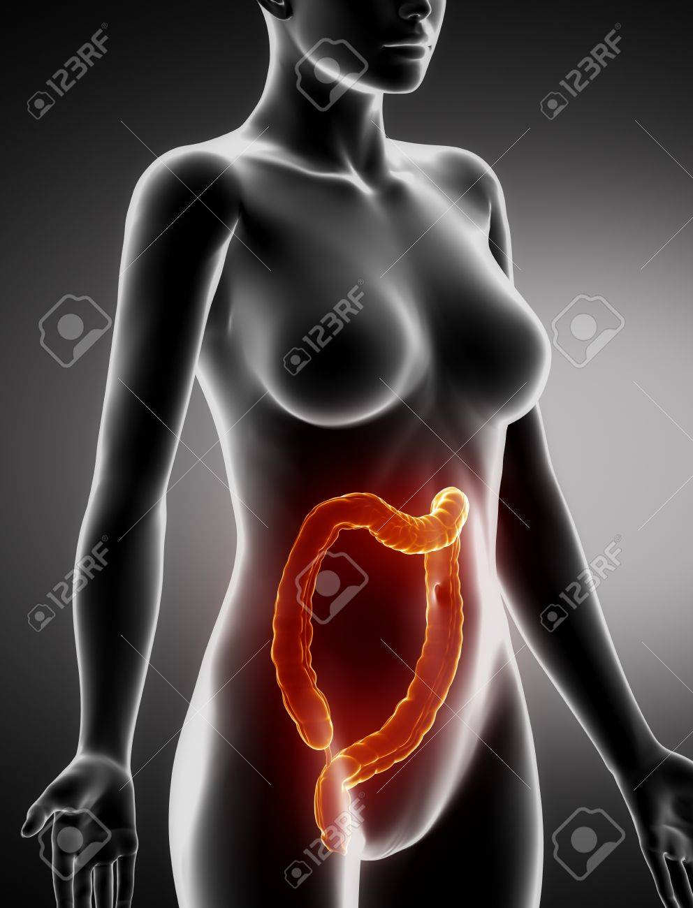 Female COLON anatomy x-ray lateral view Stock Photo - 21649734