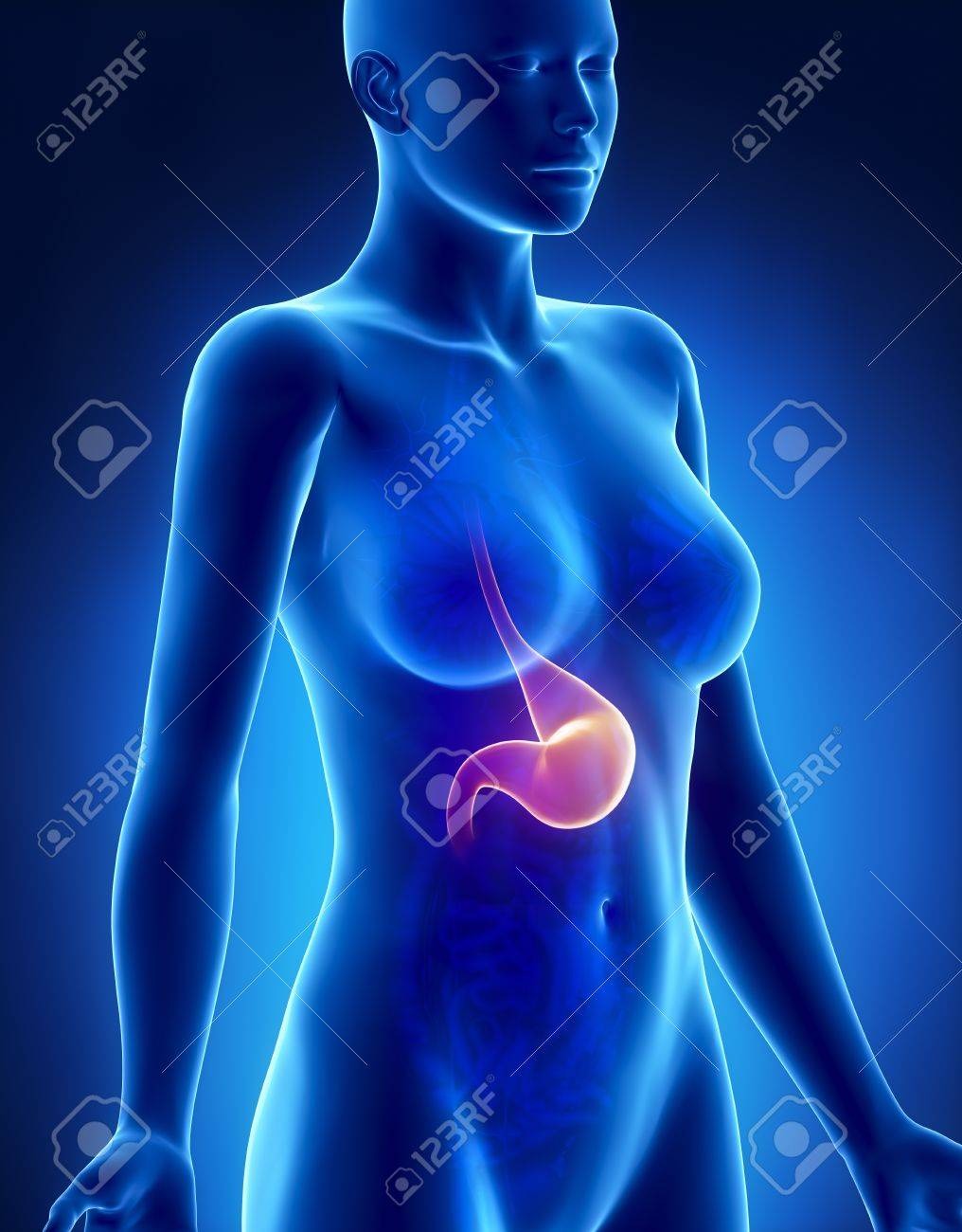 Female Stomach Anatomy X Ray Lateral View Stock Photo Picture And
