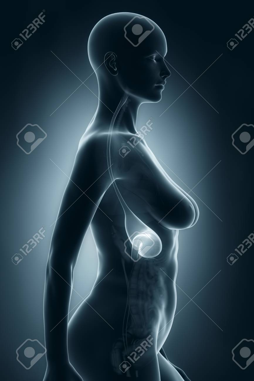 Woman stomach anatomy x ray lateral view stock photo picture and stock photo woman stomach anatomy x ray lateral view ccuart Choice Image