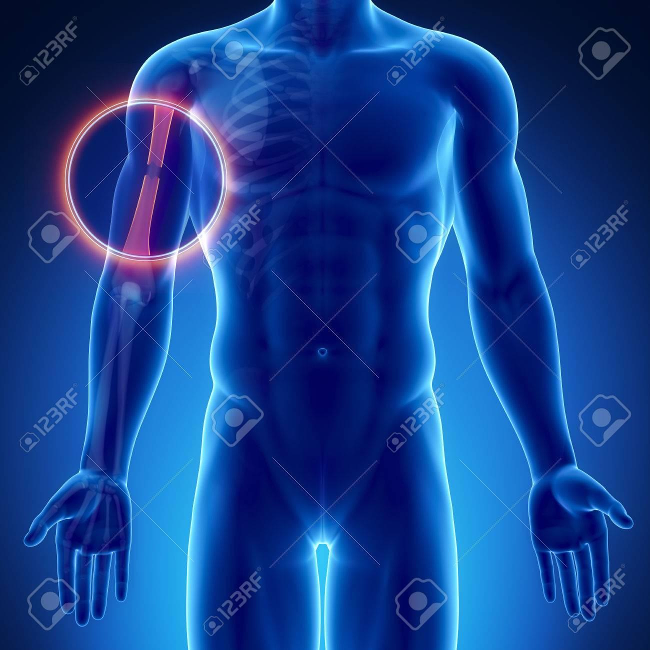 Asombroso Prácticas De Etiquetado Anatomía Cresta - Anatomía de Las ...