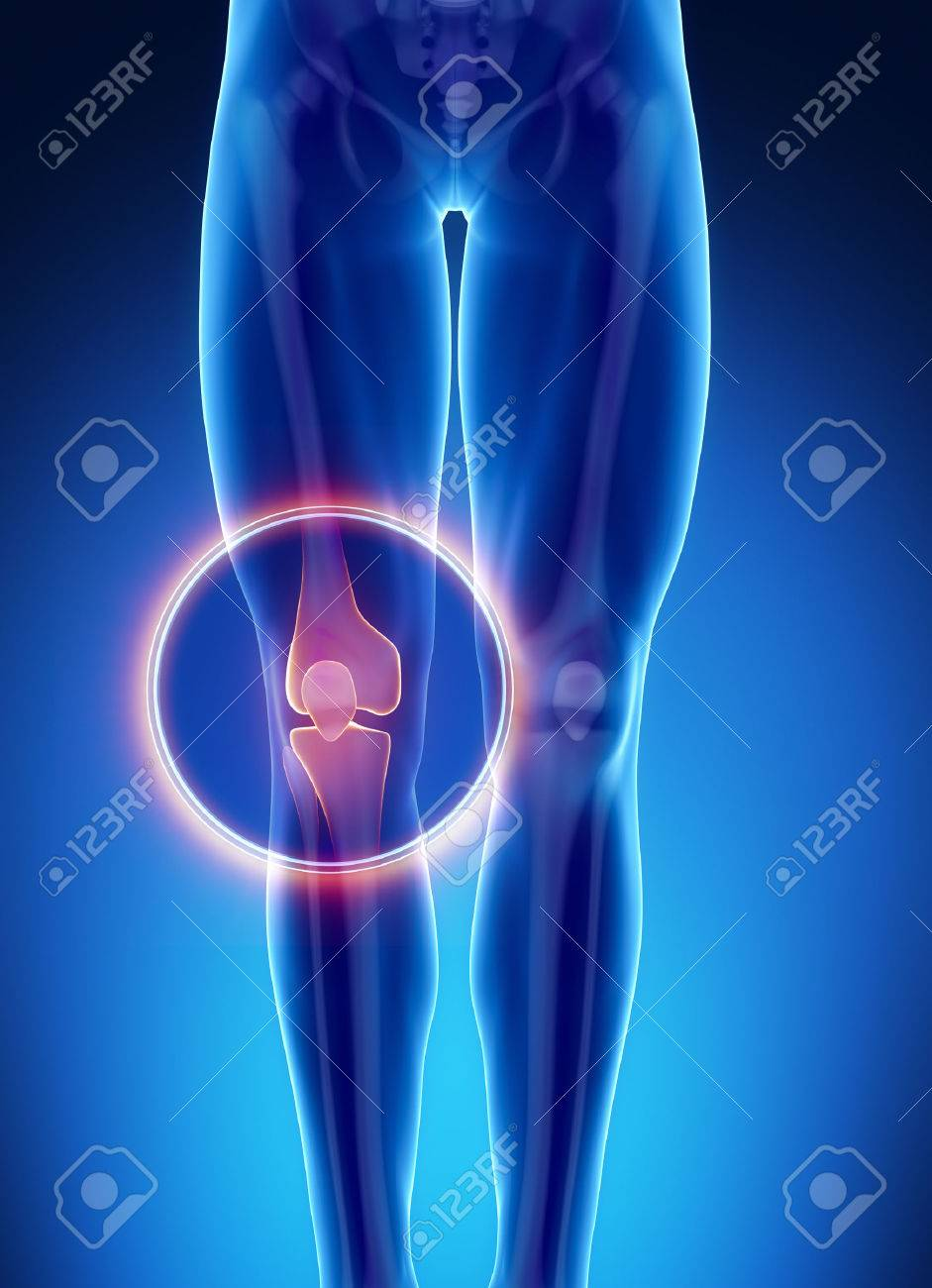 Male Bone Anatomy Knee Stock Photo, Picture And Royalty Free Image ...