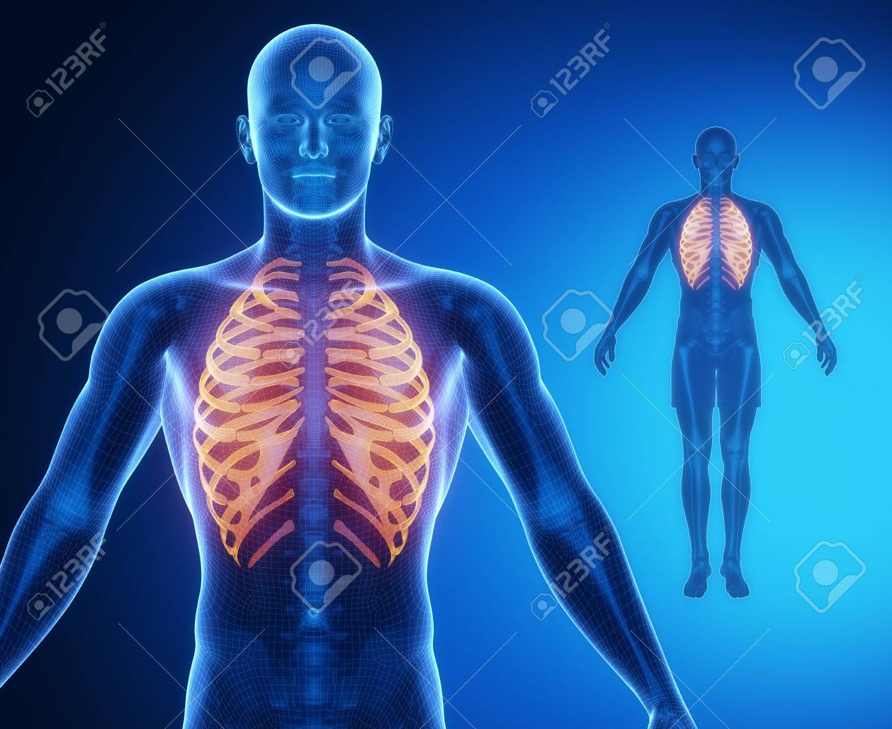 Encantador Anatomía ósea Pterygoid Composición - Imágenes de ...