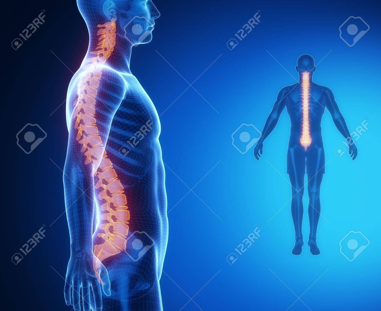 Asombroso Fundido Anatomía Grises Componente - Imágenes de Anatomía ...