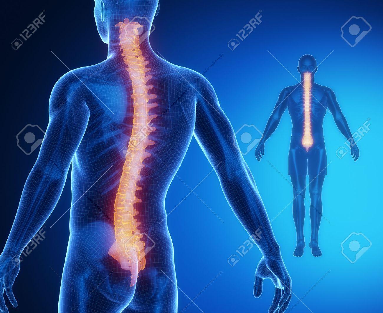 Excelente Anatomía ósea Motivo - Imágenes de Anatomía Humana ...