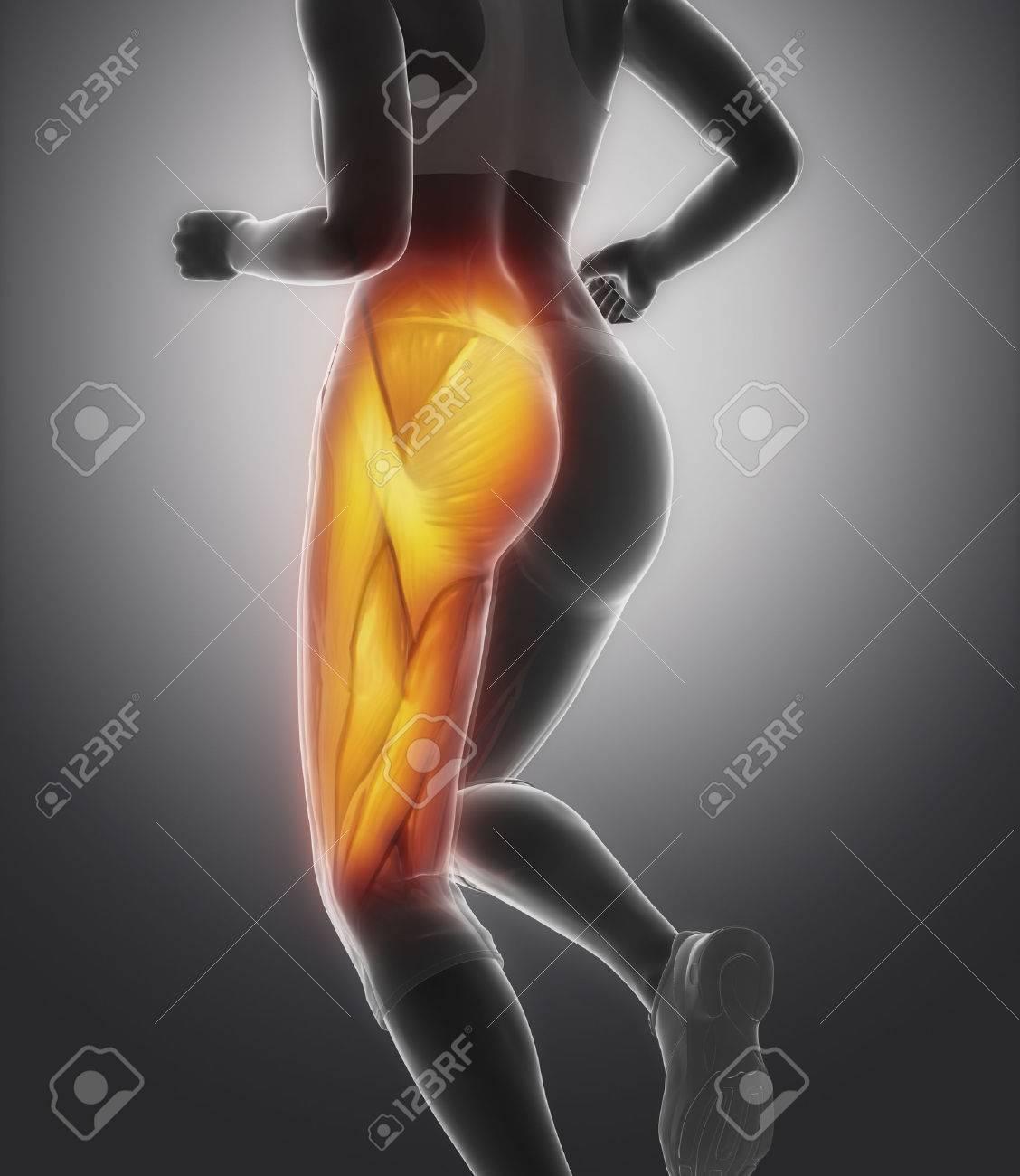 El Músculo Del Muslo Anatomía Femenina Fotos, Retratos, Imágenes Y ...