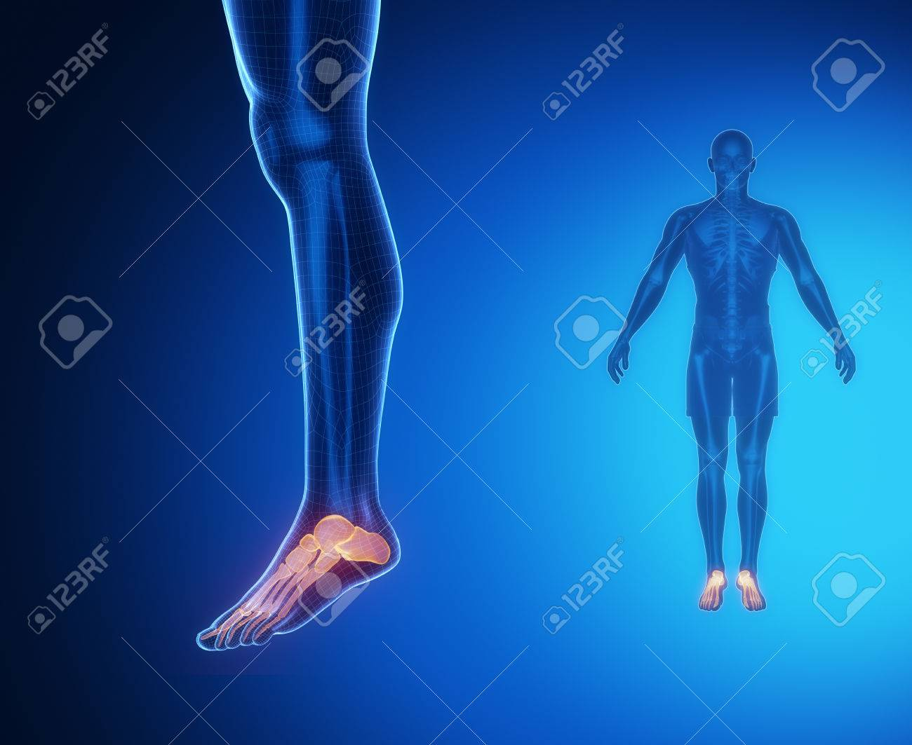 ANKLE Bone Anatomy X-ray Scan Stock Photo, Picture And Royalty Free ...