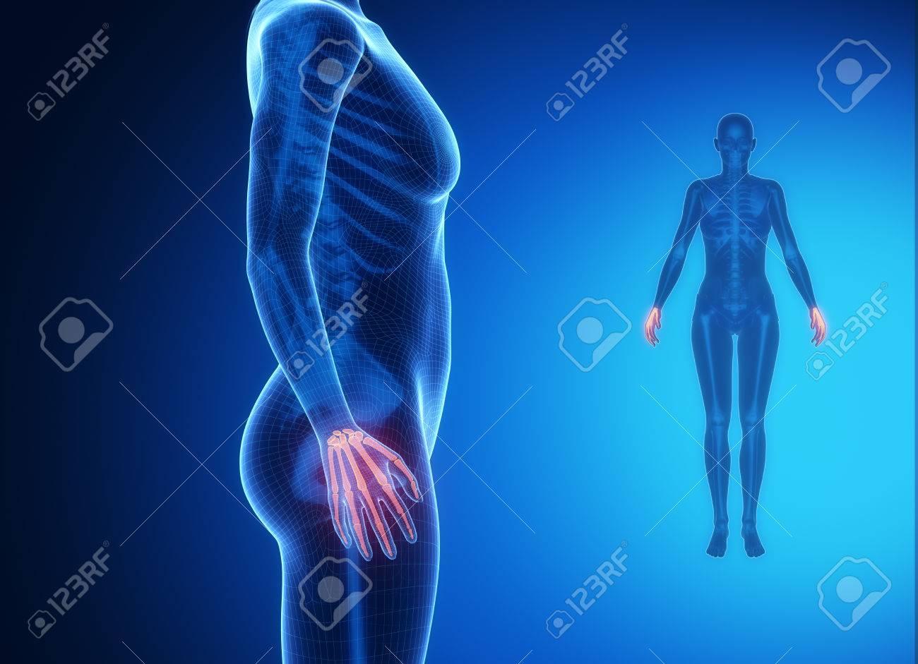 Excelente Anatomía ósea De La Muñeca Elaboración - Imágenes de ...