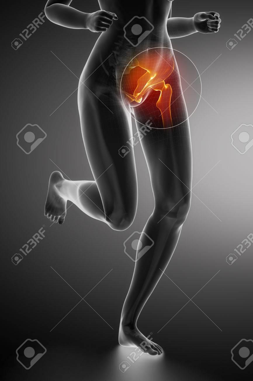 Ejecución De Mujer - Anatomía De La Cadera Fotos, Retratos, Imágenes ...