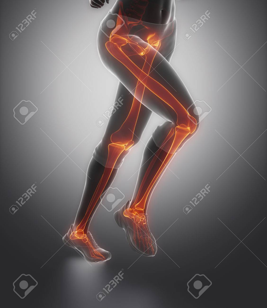 Centrado En Los Huesos De La Pierna Anatomía Fotos, Retratos ...