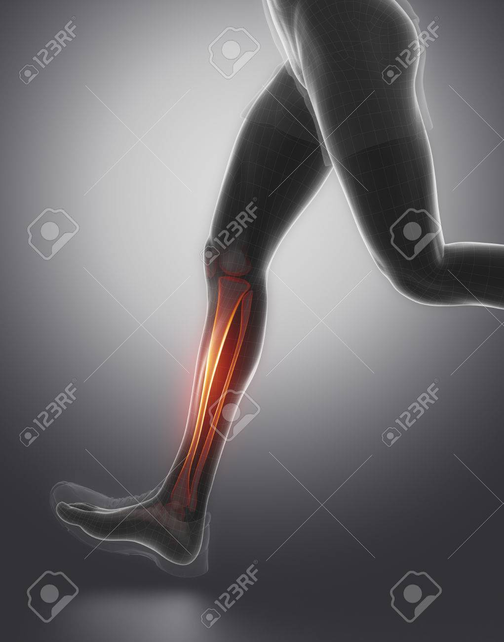 Tibia Fibula Anatomy Stock Photo, Picture And Royalty Free Image ...