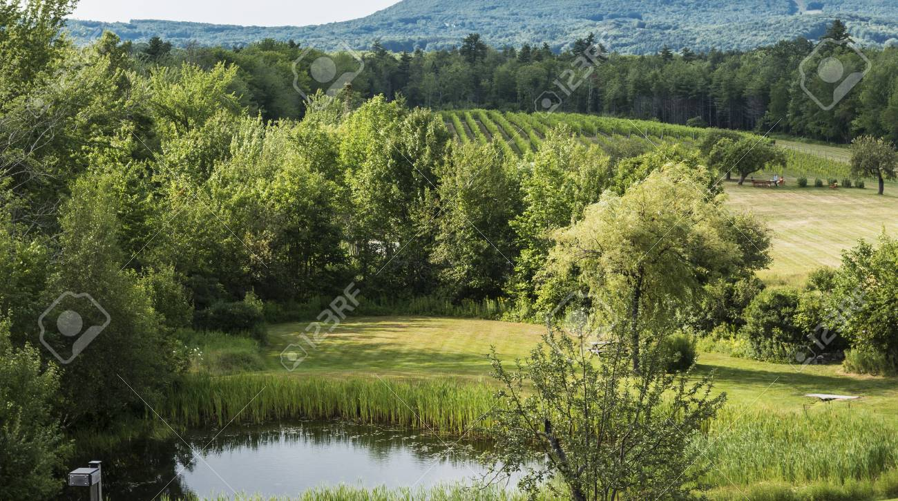 A view of a small vineyard in Lincolnville Maine called Cellardoor Winery. Stock Photo - & A View Of A Small Vineyard In Lincolnville Maine Called Cellardoor ...