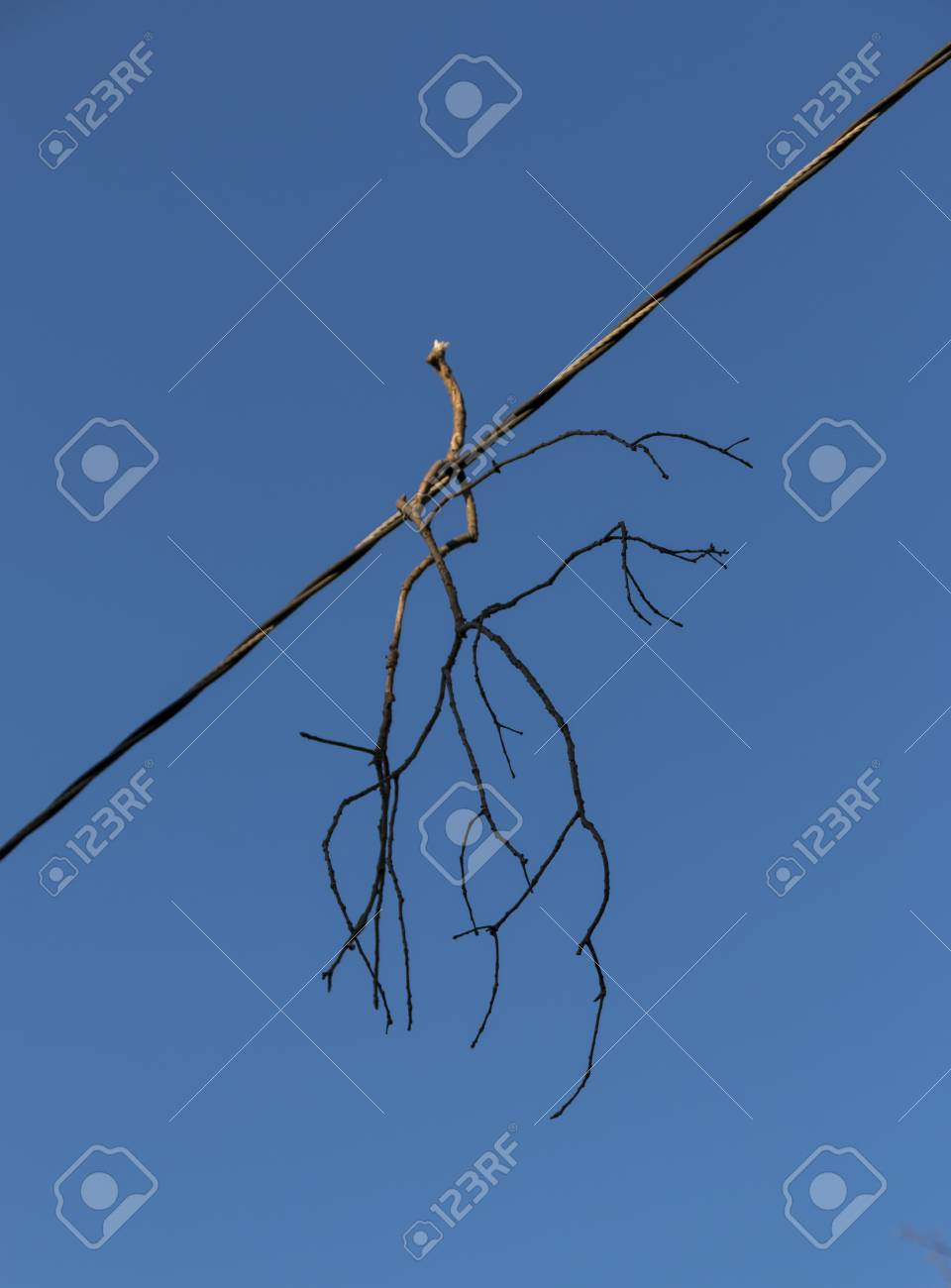 A Branch From A Tree Is Hanging On Edectricity Wire After A Very ...