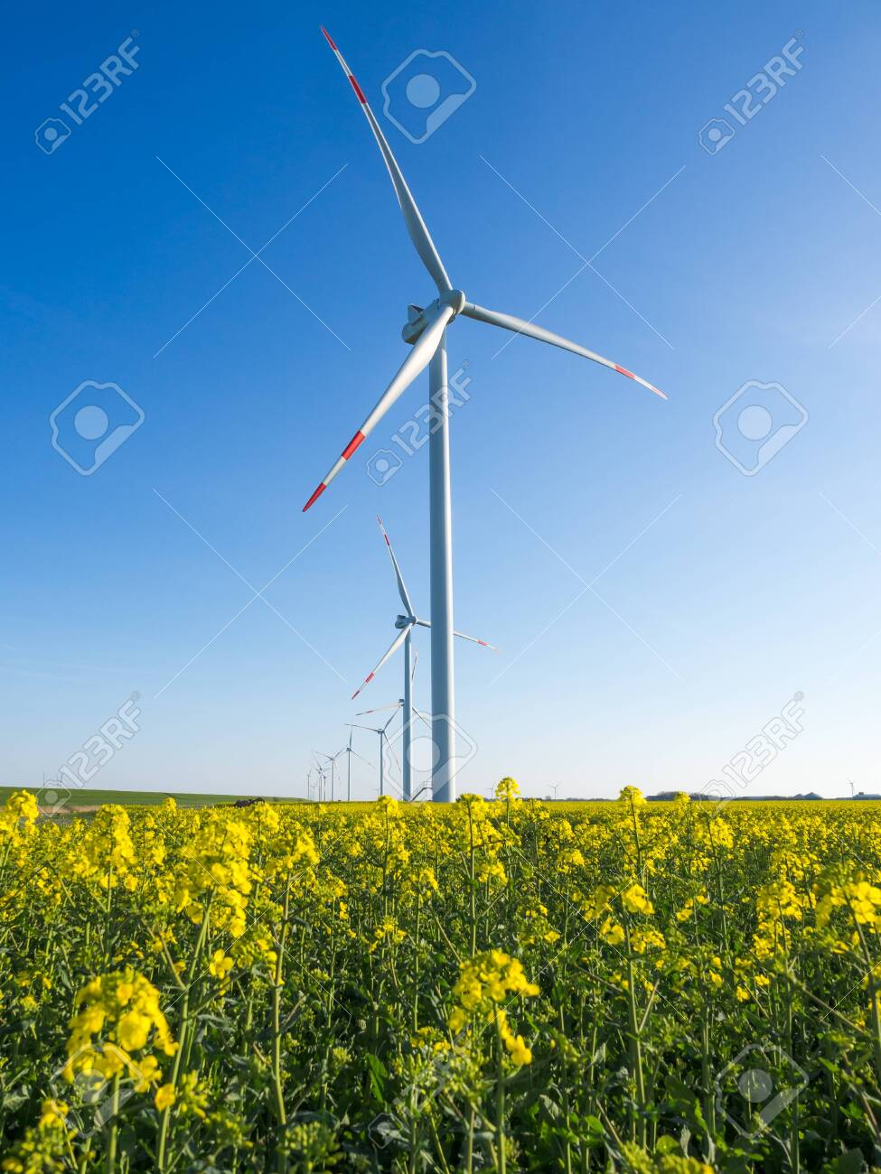 Wind turbines or windmills creating electricity out of wind energy on yellow rape or canola field, Nordfriesland, Germany. - 136808534