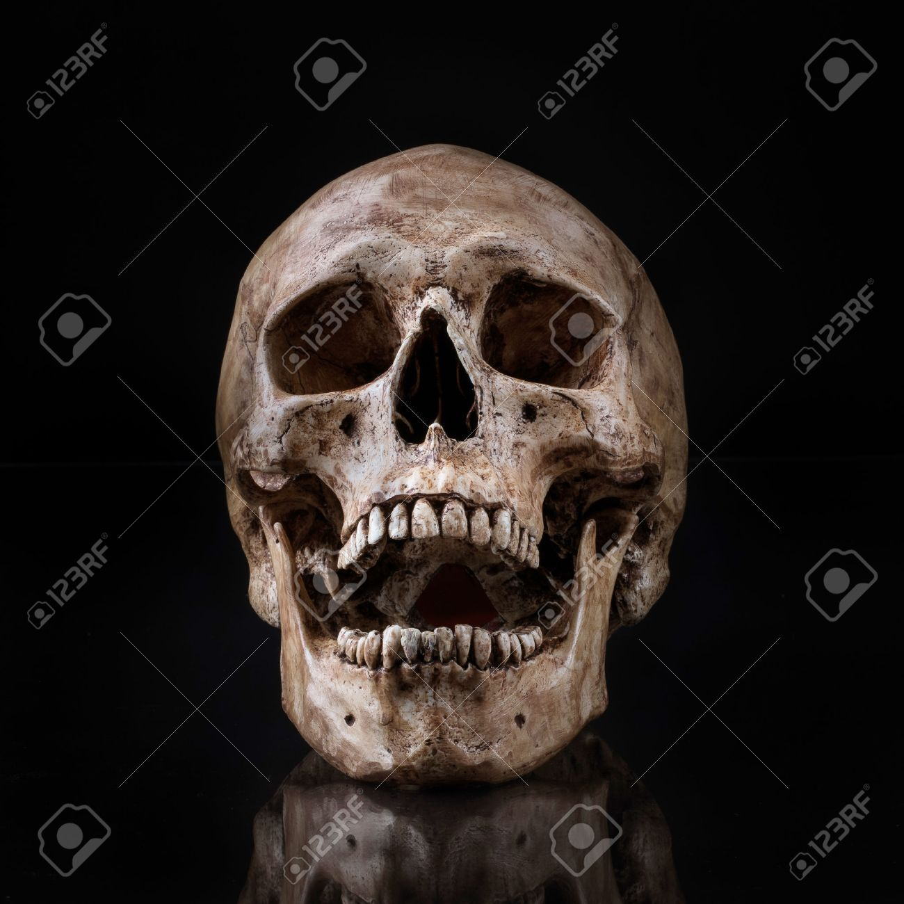 Human Skull Stock Photos Royalty Free Human Skull Images