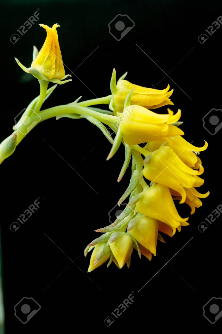 Fiori Gialli Bellissimi.Immagini Stock I Bellissimi Fiori Gialli Image 43895610