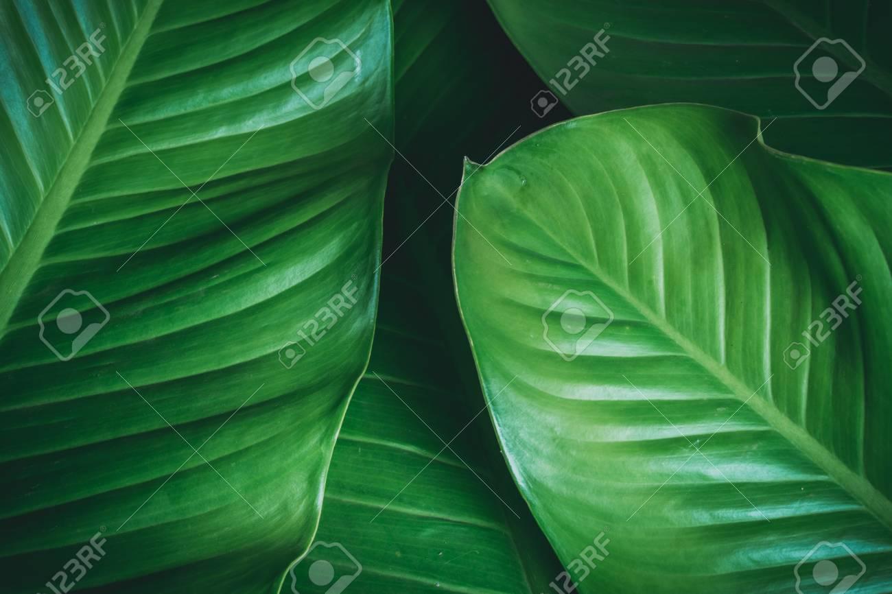 green leaves dark nature background - 95474748