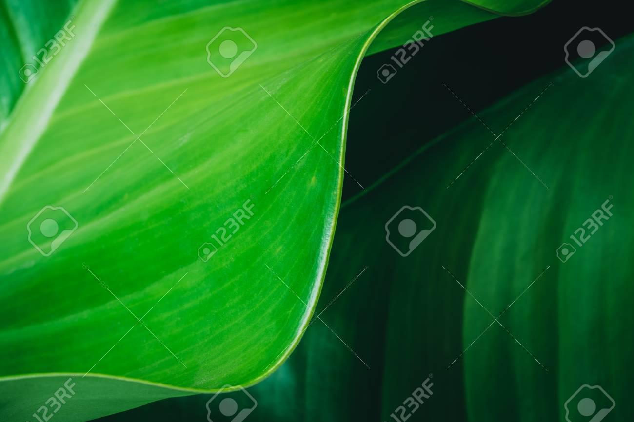 green leaves dark nature background - 95475055