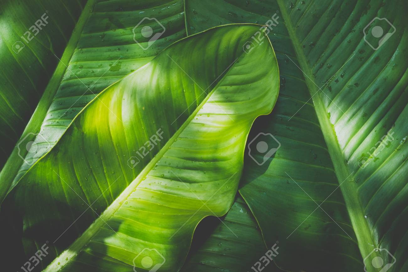 Low key green leafs dark nature background - 95475061