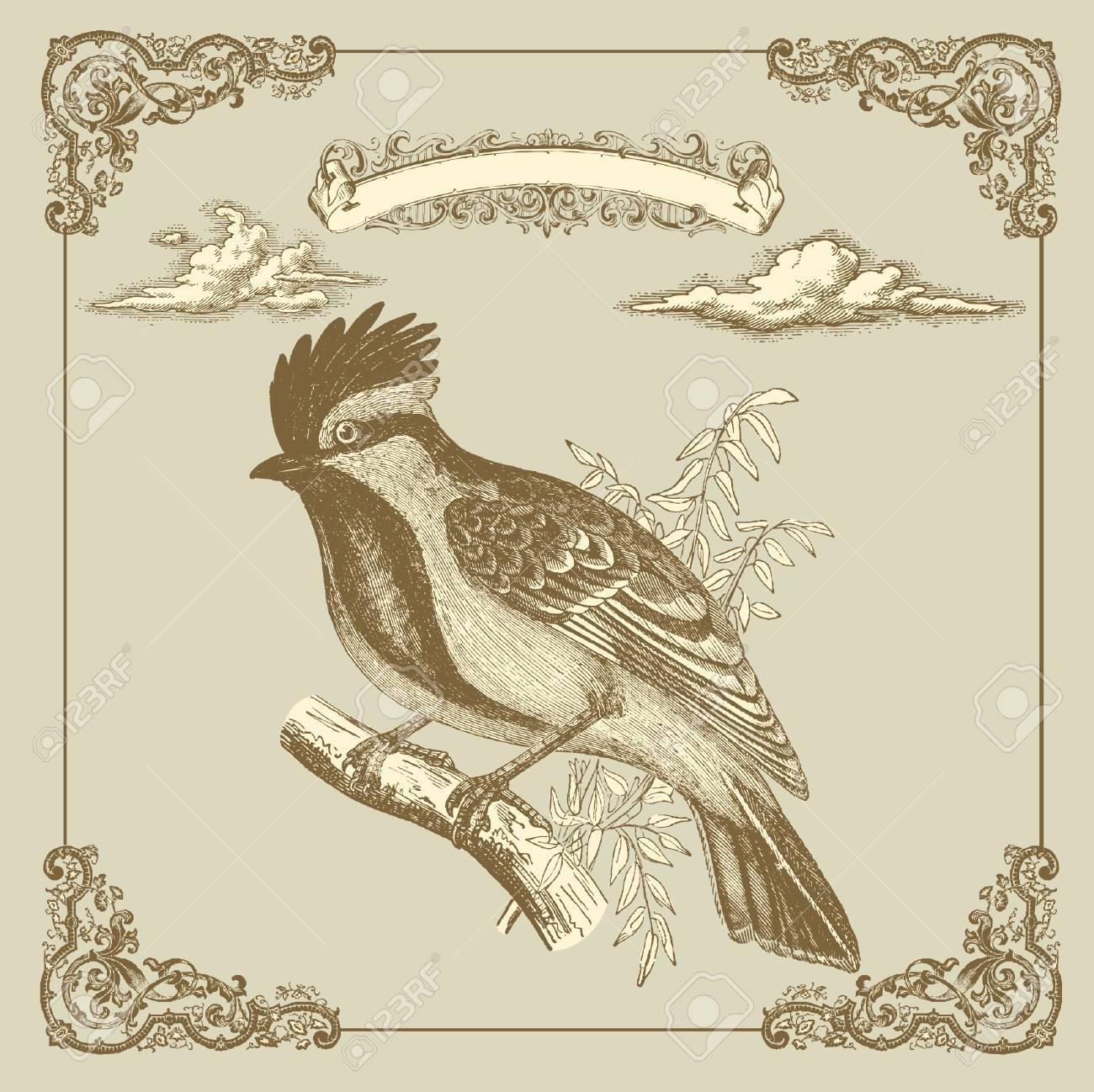 Retro card with bird Stock Vector - 9655395