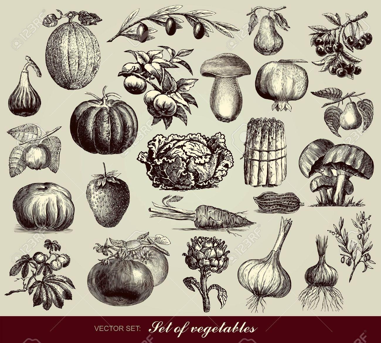 set of vegetables Stock Vector - 10159532