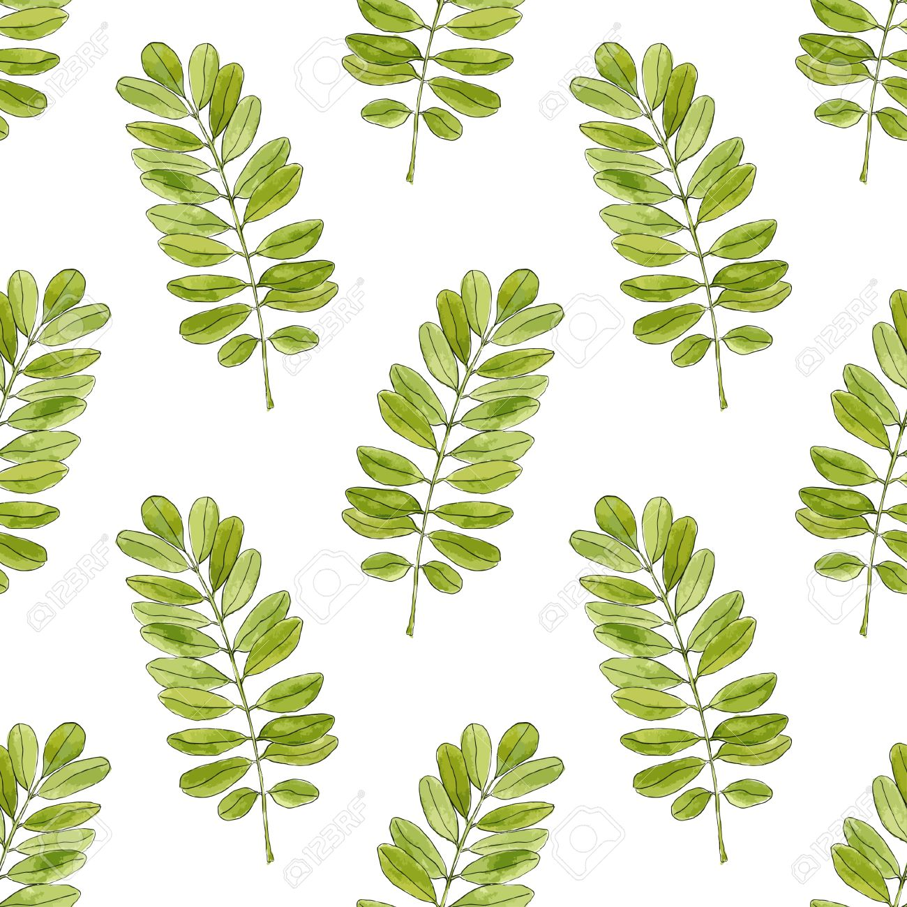 Watercolor Seamless Pattern With Acacia Leaves Hand Drawn Vector