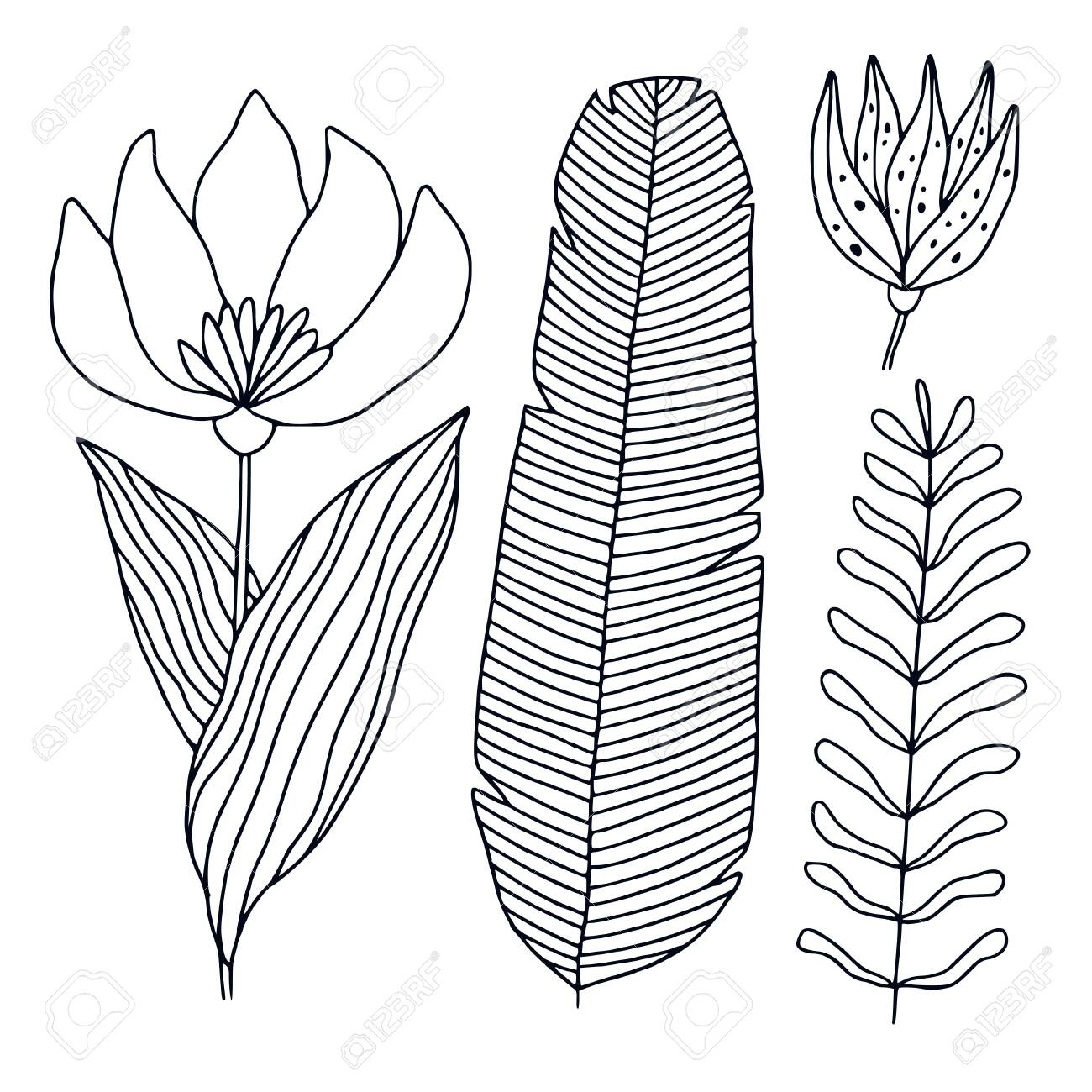 - Tropical Flora Illustration. Printable Line Art. Tropic Leaves And