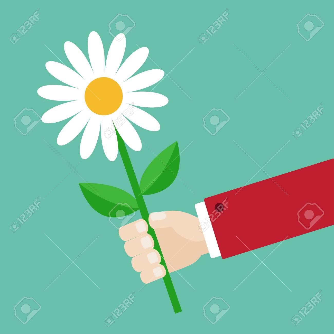 Daisy Flower Cartoon