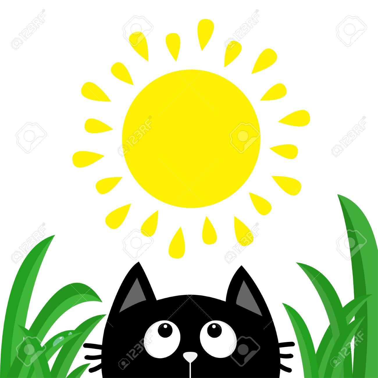Silhouette De Tete De Chat Noir Regardant Le Soleil Brillant Goutte