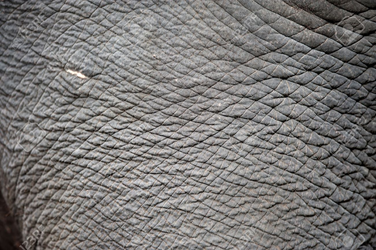 close up of elephant skin stock photo picture and royalty free