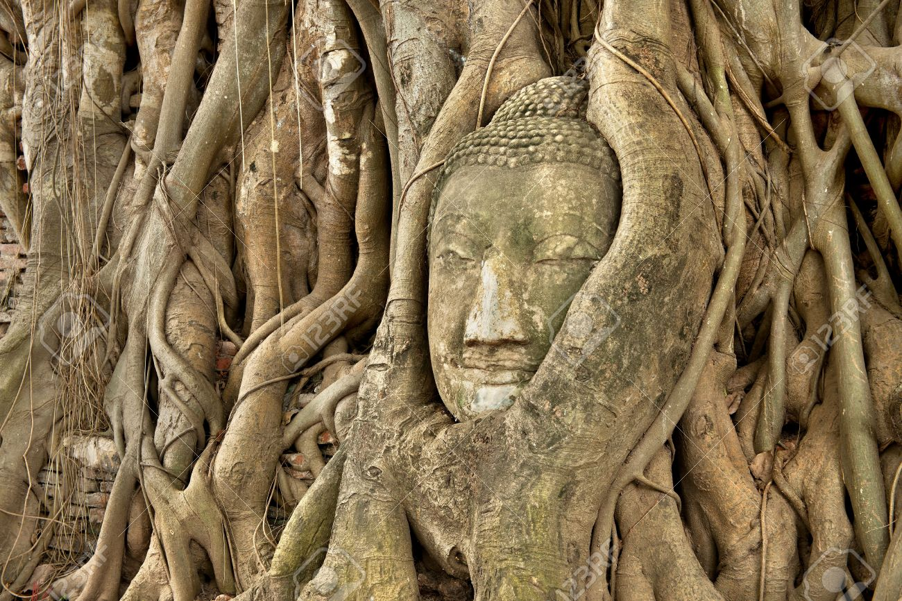 Head of Sandstone Buddha in roots of Banyan tree  at Ayutthaya , Thailand Stock Photo - 10756968