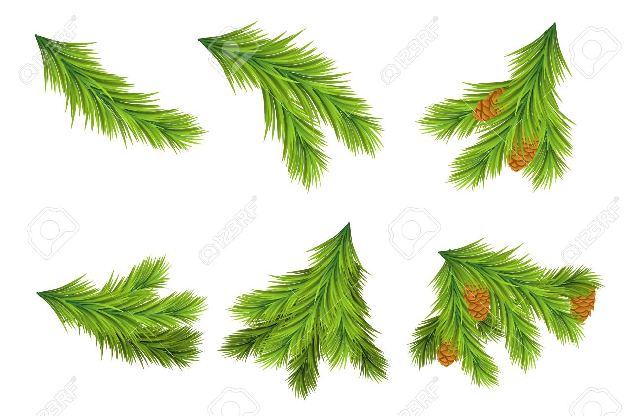 set of christmas tree branches for decorations vector illustrations on white background design elements - Christmas Tree Branches