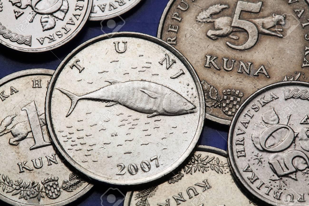 Münzen Von Kroatien Rotem Thun Olea Thunnus Thynnus In Der