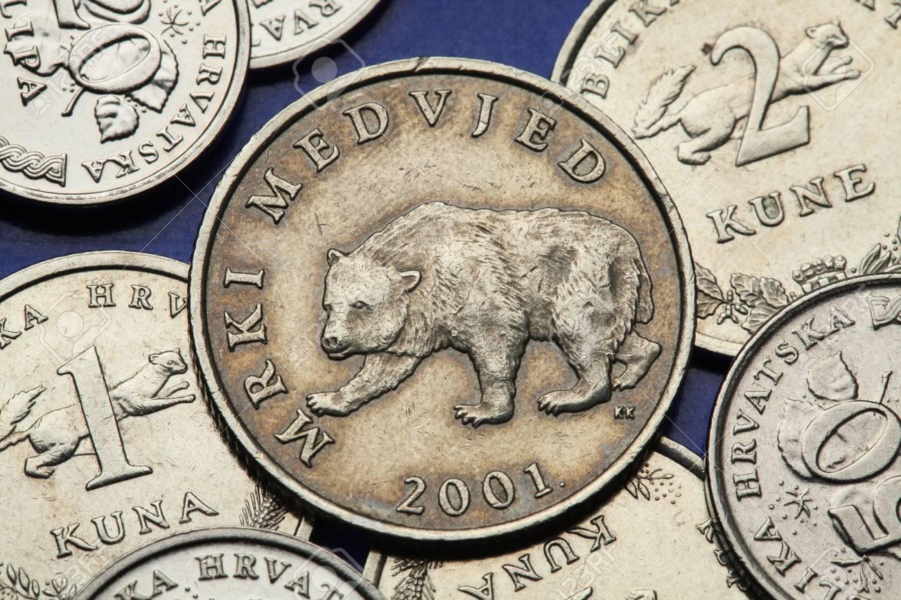 Münzen Von Kroatien Braunbär Ursus Arctos In Der Kroatischen Kuna
