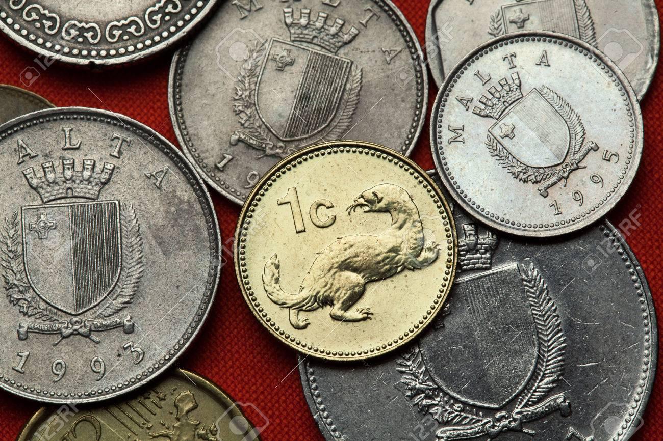 Münzen Von Malta Weasel Mustela Nivalis In Der Malteser Ein Cent