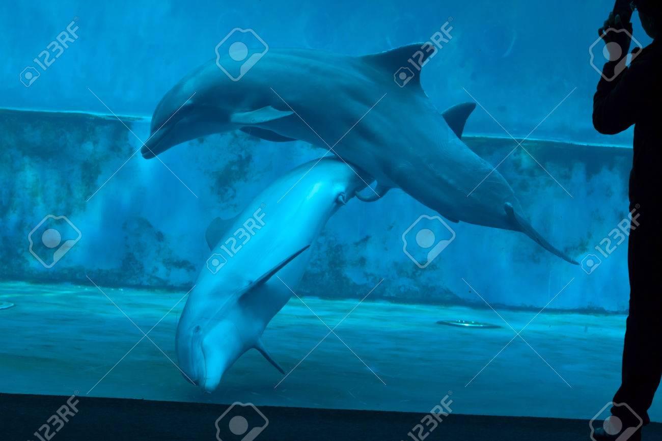 Секс дельфинами